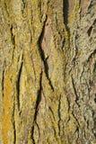 与金黄色和绿色青苔的树皮 库存照片