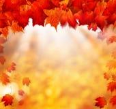 与金黄Bokeh的秋天背景 免版税库存照片
