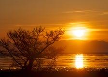 与金黄光的树晚上 库存照片