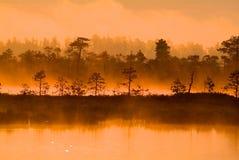 与金黄光的树 图库摄影