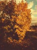 与金黄叶子的树在秋天公园 免版税库存照片
