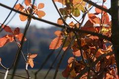 与金黄和红色叶子的不可思议的秋天背景 库存图片