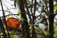与金黄和红色叶子的不可思议的秋天背景 免版税库存图片