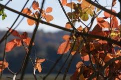 与金黄和红色叶子的不可思议的秋天背景 图库摄影