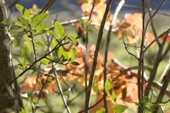 与金黄和红色叶子的不可思议的秋天背景 库存照片