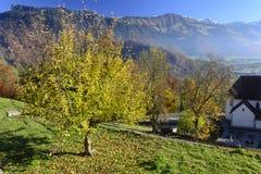 与金黄树的秋天风景 免版税库存图片