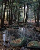 与金黄森林的岩石小河 免版税图库摄影