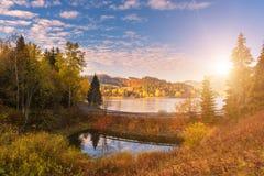 与金黄色的树的五颜六色的晴朗的秋天风景 免版税库存图片