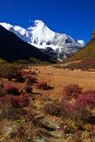 与金黄草原的雪山 库存图片