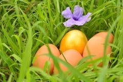 与金黄eeg和紫色花的新鲜的鸡蛋在草背景 免版税图库摄影