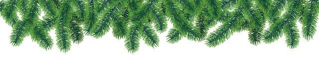与针叶子的传染媒介无缝的冬天针叶树分支在白色背景 皇族释放例证
