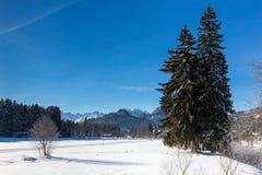 与针叶树的冬天风景 库存照片
