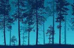 与针叶树的无缝的蓝色传染媒介森林风景和 库存图片