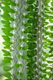 与针样式的绿色仙人掌背景的 免版税库存照片