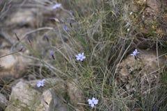 与钉的紫罗兰色花在小卵石 免版税库存照片