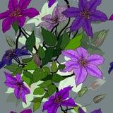 与铁线莲属花的无缝的装饰品 库存照片