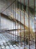 与铁锈和草的老被放弃的大厦 免版税库存照片