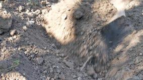 与铁锹的农夫开掘的春天土壤在庭院或领域里 股票视频