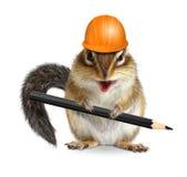 与铅笔和安全帽的滑稽的建筑师花栗鼠在白色 免版税库存图片