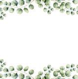 与银元玉树的水彩绿色花卉框架卡片离开 与分支和叶子的手画边界  皇族释放例证