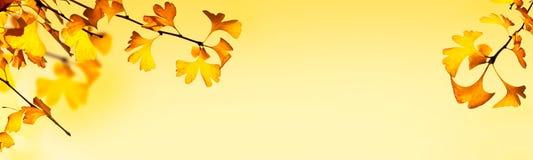 与银杏树biloba叶子的秋季倒栽跳水 免版税库存照片