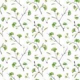 与银杏树biloba绿色叶子的无缝的样式  免版税库存图片