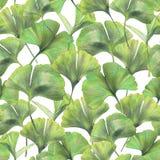 与银杏树biloba绿色叶子的无缝的样式  免版税库存照片