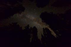 与银河星系和树剪影的繁星之夜天空 库存照片