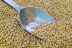 与银色瓢的大豆豆 免版税库存图片