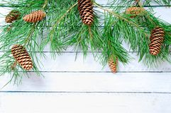 与锥体的圣诞树 库存照片