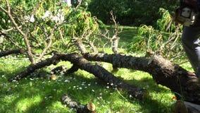 与锯的男性花匠锯切分支 在风暴以后的清洗的庭院 常平架 股票录像