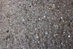 与镇压、壳和斑点的灰色未加工的混凝土墙背景 免版税库存图片