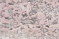 与镇压的桃红色油漆涂层在一块肮脏的灰色石头 剥桃红色油漆难看的东西 免版税库存照片