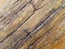 与镇压的潮湿的木纹理背景的 图库摄影