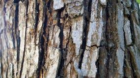 与镇压的灰色树皮 免版税库存图片