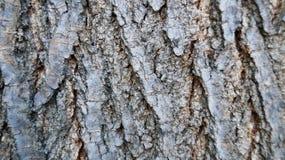 与镇压的灰色树皮 库存图片