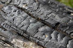 与镇压的被烧焦的木头 免版税图库摄影