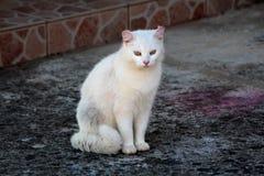 与镇静地坐石基础和好奇地看照相机的美丽的眼睛的白色逗人喜爱的家猫 库存照片
