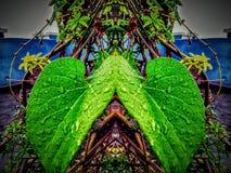 与镜子作用的叶子画象 免版税库存照片