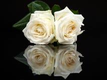 与镜象的两朵白玫瑰在黑色 免版税库存图片