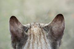 与镶边毛皮的可爱的猫 图库摄影