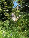 与镶边的蝴蝶的风景静物画 库存图片