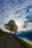与长凳的树与山和湖、天空和云彩 图库摄影