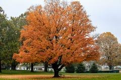 与长凳的秋天树 免版税图库摄影