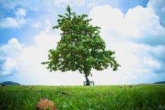与长凳的美丽的树在夏天 免版税图库摄影