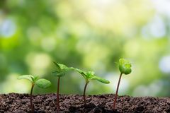 与长大从在被弄脏的绿色bokeh的土壤的水下落的年轻绿色新芽有软的阳光背景 免版税库存图片