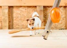 与长扫帚尘土的滑稽的管家清洁在建造场所 库存图片