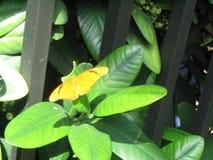 与长方形黑的条纹的橙色蝴蝶 免版税库存图片