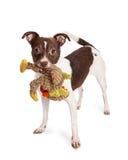 与长毛绒玩具的小的狗杂种狗 免版税库存图片