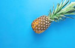 与长的分蘖性绿色叶子的成熟菠萝在蓝色背景 暑假旅行热带水果维生素时尚概念 免版税库存照片